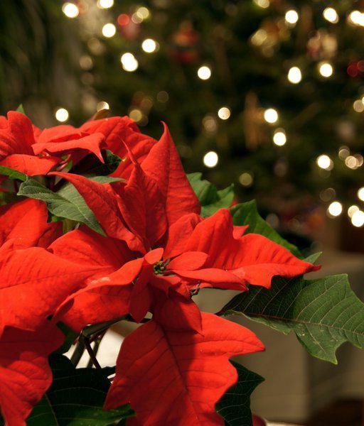Рождественская звезда падают листья